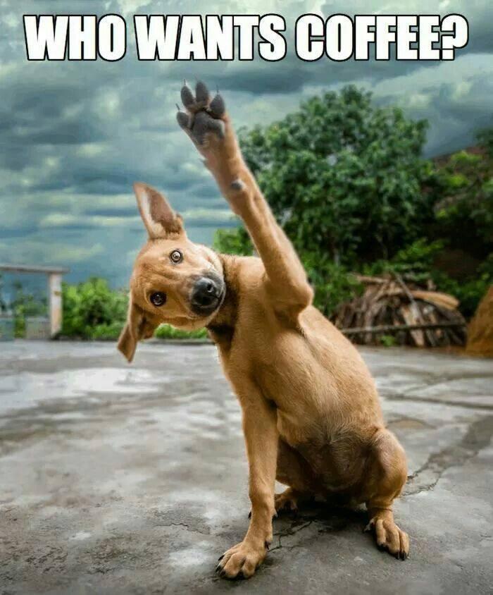 Funny Coffee Meme Jpg
