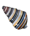 C293 Seashells i01 Liguus virgineus