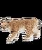 C141 Wild cats i04 Eurasian Lynx