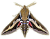 C618 World of butterflies i02 Lime hawk-moth