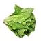 C315 Caesar salad i01 Romaine lettuce