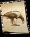 C140 Birds of prey i06 Stellers Sea Eagle