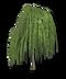 C228 Herbalists advice i02 Willow tree