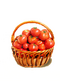C427 Vegetable crop i01 Tomato crop