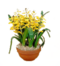 C327 Potted flowers i02 Lachenalia aloides