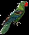 C019 Birds Paradise i04 Parrot.png
