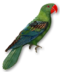 C019 Birds Paradise i04 Parrot