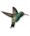 C019 Birds Paradise i01 Hummingbird.png