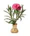 C379 Blooming garden i02 Carnation seedlings