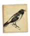 C139 Beautiful birds i02 Baltimore Oriole