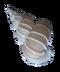 C293 Seashells i04 Precious wentletrap