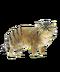 C141 Wild cats i02 Pampas Cat