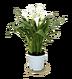 C610 Magic of flowers i04 Calia