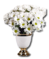 C009 Fragrant Flowers i03 Daisies.png