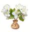 C379 Blooming garden i03 Jasmine seedlings