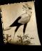C140 Birds of prey i01 Secretary Bird