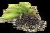 C610 Magic of flowers i03 Elderberry