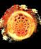 C218 Legendary shields i03 Svalinn shield