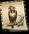 C140 Birds of prey i04 Harpy Eagle