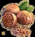 C715 Divination Potion i04 Nutmeg