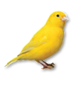 C019 Birds Paradise i03 Canary.png