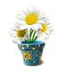 C536 Fantastic plants i04 Singing daisies