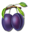 C024 Grandmothers Jam i02 Plums.png