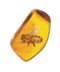 C089 Insects in amber i05 Ancient bee