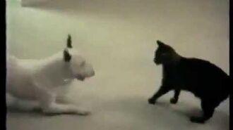 Eine Katze jagt einen Hund