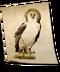 C140 Birds of prey i05 Monkey Eating Eagle