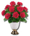 C009 Fragrant Flowers i01 Carnations.png