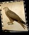 C140 Birds of prey i02 Red Kite
