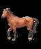C094 Coyboys horse i01 Frisky horse