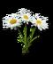 C228 Herbalists advice i04 Chamomile