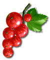 C024 Grandmothers Jam i03 Redcurrant berries.png