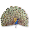 C019 Birds Paradise i02 Peacock.png