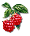 C024 Grandmothers Jam i04 Raspberries.png