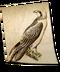 C140 Birds of prey i03 Typical Falconet