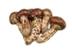 C532 Pricey foods i04 Matsutake mushroom