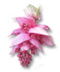 C205 Beautiful Flowers i06 Medinilla