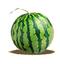 C428 Abundant harvest i06 Huge watermelon