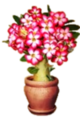 Desert Rose special item
