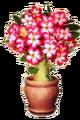 Desert Rose special item