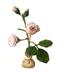 C379 Blooming garden i01 Rose seedlings