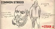 Common-Strigoi-Sketch-the-strain-fx-38643294-1024-535