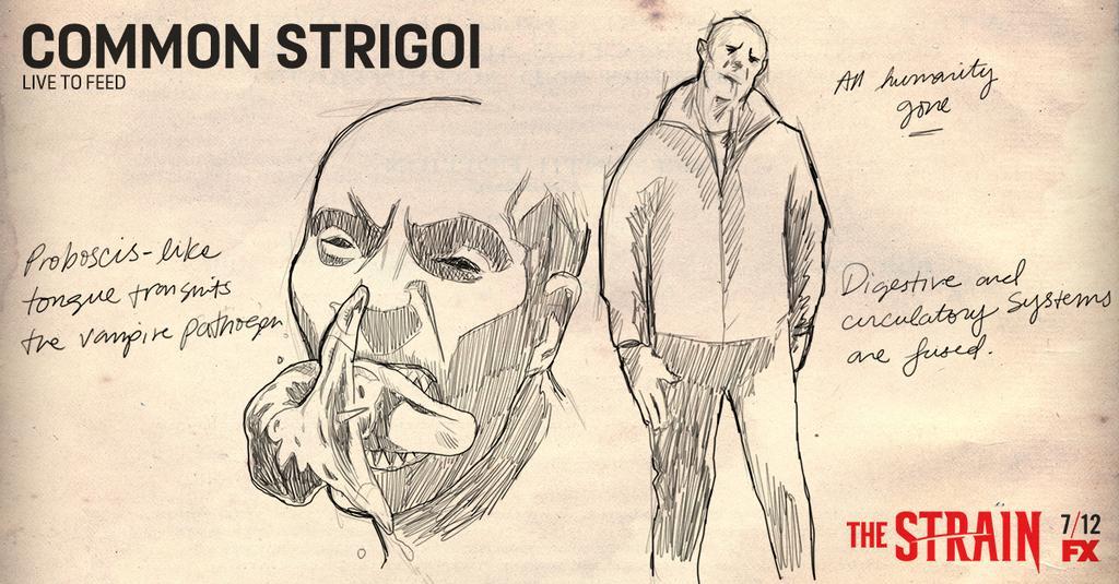 Vampire Strigoi The Strain Wiki Fandom Powered By Wikia