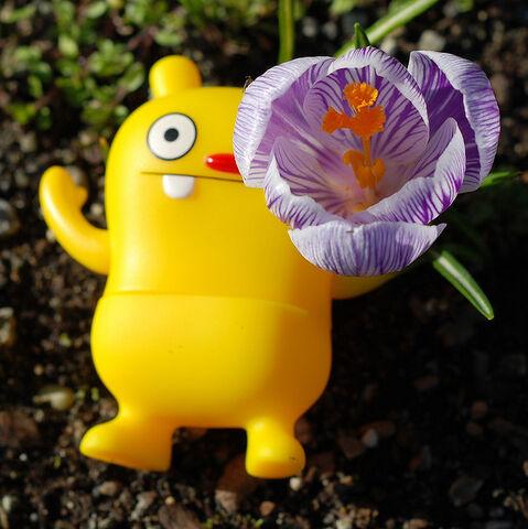 File:Spring.jpg