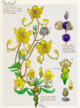 Faerie-flowers colors