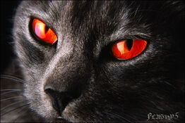 Evil red eyed black cat by