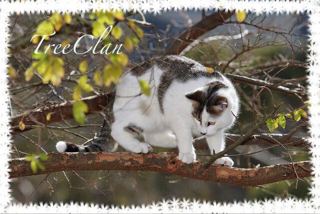 File:TreeClan by Iceay.jpg